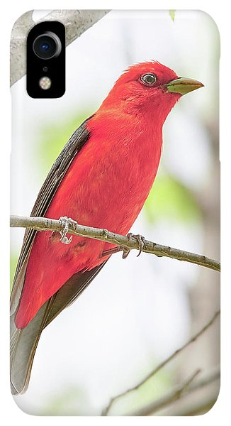 Scarlet iPhone XR Case - Scarlet Tanager by Jim Hughes