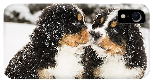 Small iPhone XR Case - Snowy Bernese Mountain Dog Puppets by Einar Muoni