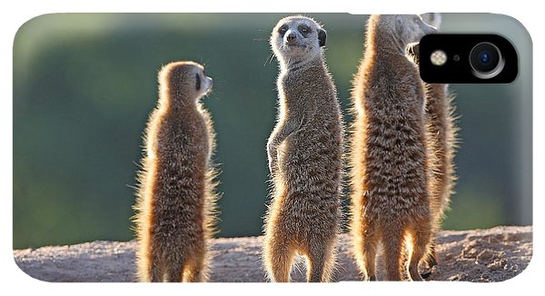 Small iPhone XR Case - Surricate Meerkats Standing Upright by Erwin Niemand