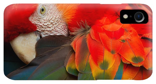 Scarlet iPhone XR Case - The Scarlet Macaw Is A Large Colorful by Ammit Jack