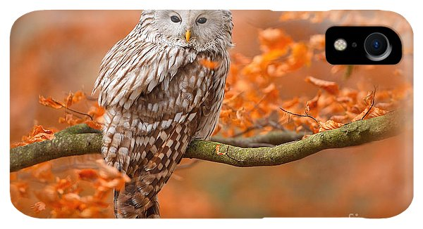 Small iPhone XR Case - Ural Owl, Strix Uralensis, Sitting On by Ondrej Prosicky