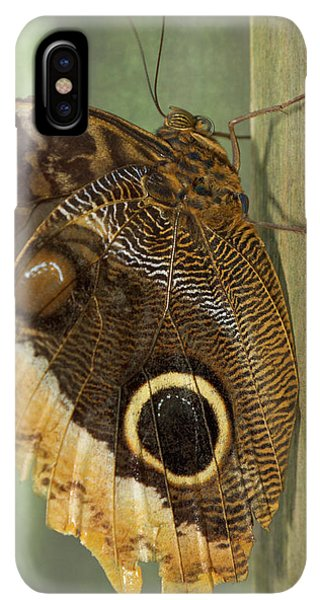 Belize iPhone XS Max Case - Owl-eye Butterfly (caligo by William Sutton