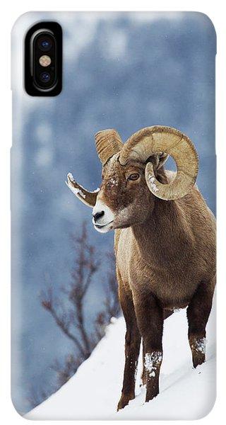 Rocky Mountain Bighorn Sheep iPhone XS Max Case - Rocky Mountain Bighorn Sheep by Ken Archer