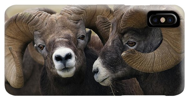 Rocky Mountain Bighorn Sheep iPhone XS Max Case - Rocky Mountain Bighorn Sheep Rams by Ken Archer
