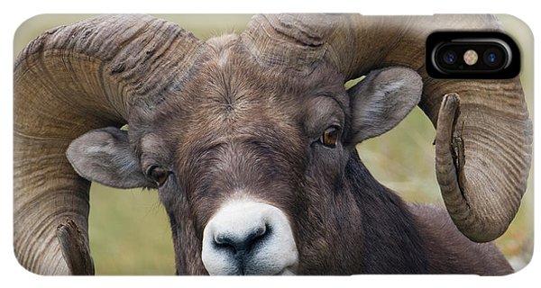 Rocky Mountain Bighorn Sheep iPhone XS Max Case - Bighorn Sheep Ram by Ken Archer