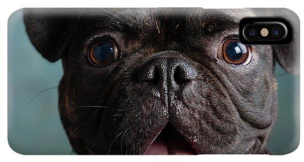 Pug iPhone XS Max Case - Portrait Of Pug Bulldog Mix Dog by Animal Images