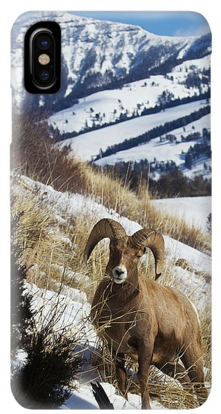 Rocky Mountain Bighorn Sheep iPhone XS Max Case - Rocky Mountain Bighorn Sheep Ram by Ken Archer