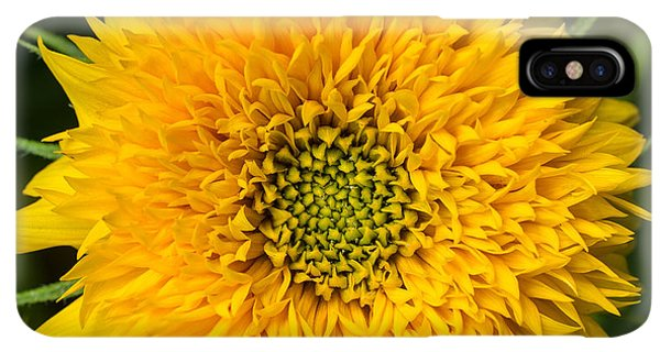 Sunflower Seeds iPhone XS Max Case - Sunflower by Edward Fielding