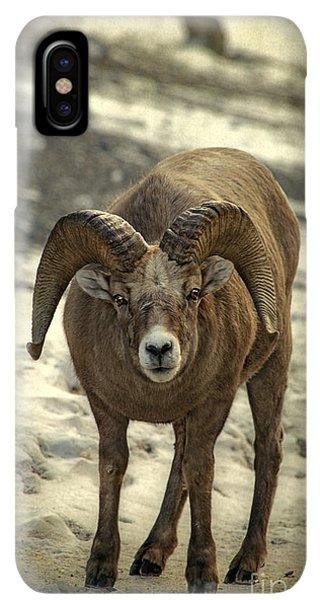 Rocky Mountain Bighorn Sheep iPhone XS Max Case - A Close Encounter by Evelina Kremsdorf