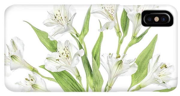 South America iPhone XS Max Case - Alstroemeria by Mandy Disher