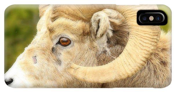 Rocky Mountain Bighorn Sheep iPhone XS Max Case - Banff Bighorn by Stephen Stookey