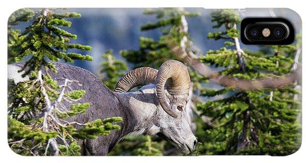 Rocky Mountain Bighorn Sheep iPhone XS Max Case - Bighorn Sheep, Glacier National Park by Yitzi Kessock