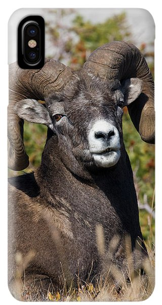 Rocky Mountain Bighorn Sheep iPhone XS Max Case - Bighorn Sheep Ram Portrait by Ken Archer