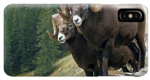Rocky Mountain Bighorn Sheep iPhone XS Max Case - Bighorn Sheep Rams by Ken Archer