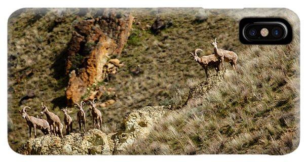 Rocky Mountain Bighorn Sheep iPhone XS Max Case - Bighorn Sheep by Robert Bales