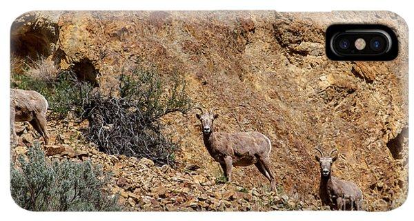 Rocky Mountain Bighorn Sheep iPhone XS Max Case - California Bighorn Sheep by Robert Bales