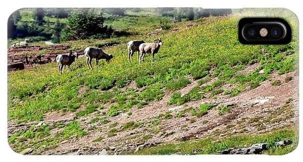 Rocky Mountain Bighorn Sheep iPhone XS Max Case - Grazing Big Horn Sheep by Robert Bales