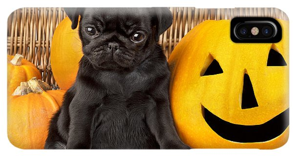 Pug iPhone XS Max Case - Halloween Pug by MGL Meiklejohn Graphics Licensing