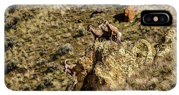 Rocky Mountain Bighorn Sheep iPhone XS Max Case - Posing Bighorn Sheep by Robert Bales