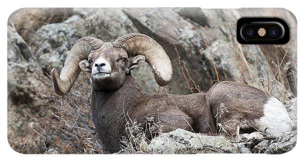Rocky Mountain Bighorn Sheep iPhone XS Max Case - Rocky Mountain Big Horn Ram On Watch II by Gary Langley