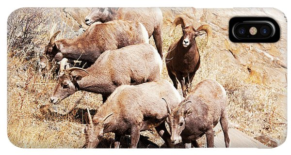 Rocky Mountain Bighorn Sheep iPhone XS Max Case - Rocky Mountain Bighorn Sheep Herd by Piperanne Worcester