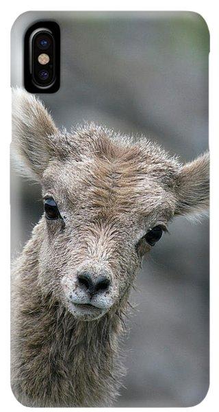 Rocky Mountain Bighorn Sheep iPhone XS Max Case - Rocky Mountain Bighorn Sheep Lamb by Ken Archer