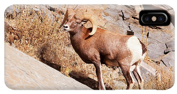 Rocky Mountain Bighorn Sheep iPhone XS Max Case - Rocky Mountain Bighorn Sheep, One Ram by Piperanne Worcester