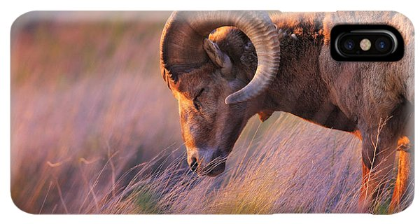 Rocky Mountain Bighorn Sheep iPhone XS Max Case - Smell The Wind by Kadek Susanto