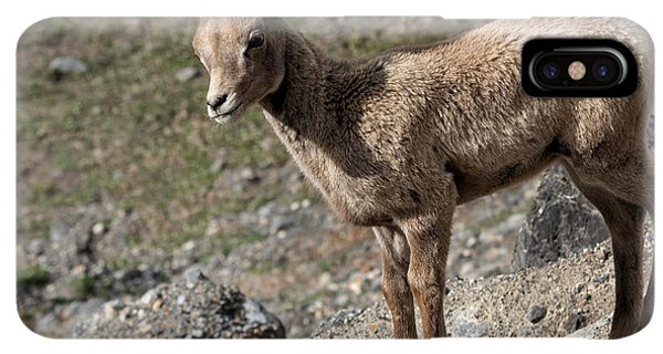 Rocky Mountain Bighorn Sheep iPhone XS Max Case - Stone Lamb by Kathleen Bishop