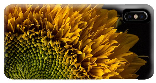 Sunflower Seeds iPhone XS Max Case - Sunflower Square by Edward Fielding