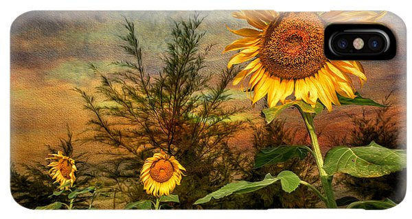 Sunflower Seeds iPhone XS Max Case - Three Sunflowers by Adrian Evans
