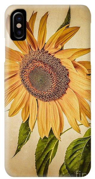 Sunflower Seeds iPhone XS Max Case - Vintage Sunflower by Edward Fielding