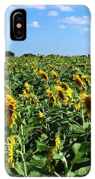 Sunflower Seeds iPhone XS Max Case - Windblown Sunflowers by Robert Frederick