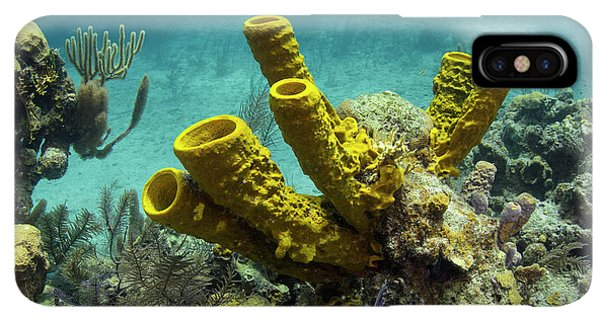 Belize iPhone XS Max Case - Yellow Tube Sponge (aplysina Fistularis by Pete Oxford