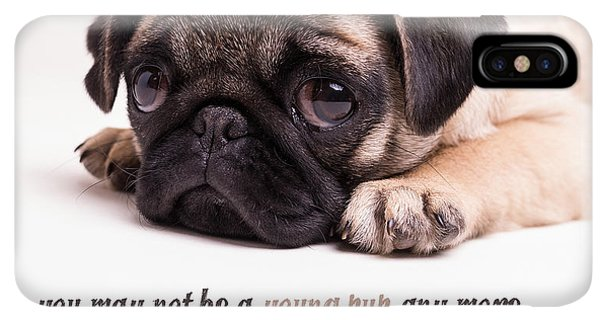 Pug iPhone XS Max Case - Young Pup by Edward Fielding