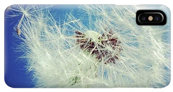 iPhone XS Max Case - Dandelion And Blue Sky by Matthias Hauser