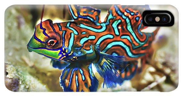Scuba Diving iPhone XS Max Case - Tropical Fish Mandarinfish by MotHaiBaPhoto Prints