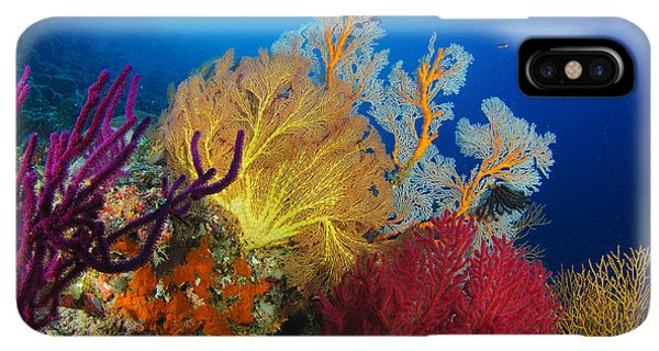 Scuba Diving iPhone XS Max Case - A Diver Looks On At A Colorful Reef by Steve Jones