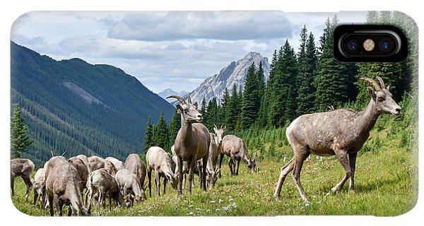 Rocky Mountain Bighorn Sheep iPhone XS Max Case - Big Horn Sheep by Paul Quinn