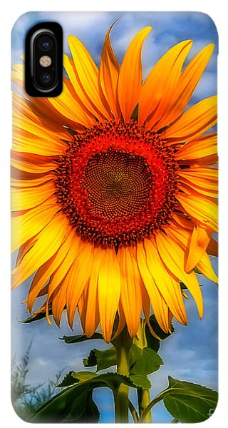 Sunflower Seeds iPhone XS Max Case - Blooming Sunflower  by Adrian Evans