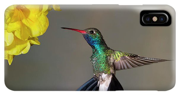 Humming Bird iPhone XS Max Case - Delicate by Janet Fikar
