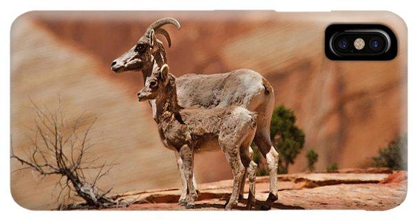 Rocky Mountain Bighorn Sheep iPhone XS Max Case - Desert Bighorn Sheep by Robert Bales