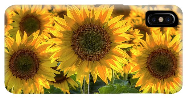 Sunflower Seeds iPhone XS Max Case - Happy by Mark Kiver