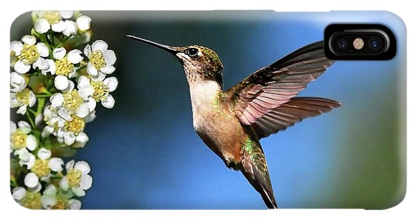 Humming Bird iPhone XS Max Case - Just Looking by Christina Rollo