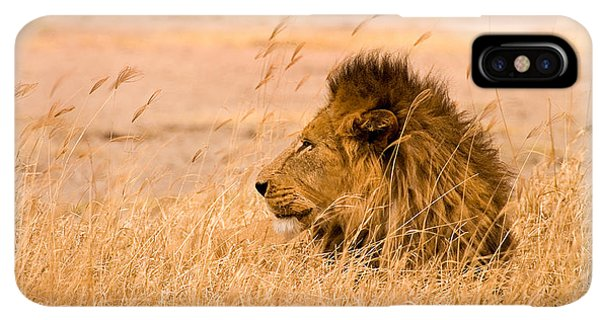 Africa iPhone XS Max Case - King Of The Pride by Adam Romanowicz