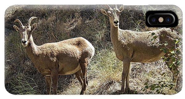 Rocky Mountain Bighorn Sheep iPhone XS Max Case - Mountain Sheep by Robert Bales