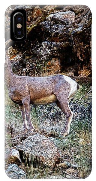 Rocky Mountain Bighorn Sheep iPhone XS Max Case - Posing Mountain Sheep by Robert Bales