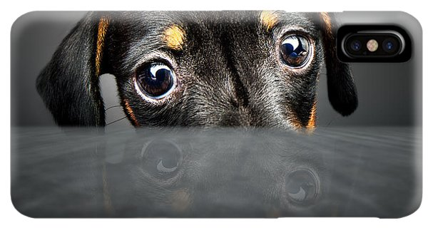 Puppies iPhone XS Max Case - Puppy Longing For A Treat by Johan Swanepoel
