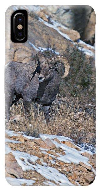 Rocky Mountain Bighorn Sheep iPhone XS Max Case - Rocky Mountain Big Horn Ram  by Gary Langley