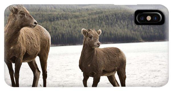 Rocky Mountain Bighorn Sheep iPhone XS Max Case - Rocky Mountain Sheep by Mark Duffy